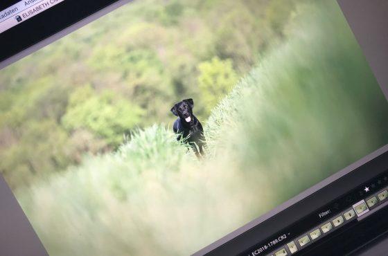 Ein Foto von Kiwi erscheint auf dem Laptop von Elisabeth zur weiteren Bearbeitung