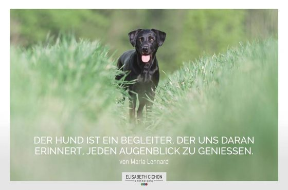 Der Hund ist ein Begleiter, der uns daran erinnert, jeden Augenblick zu genießen